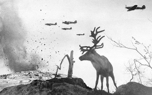 Military Planes Flying Above Reindeer